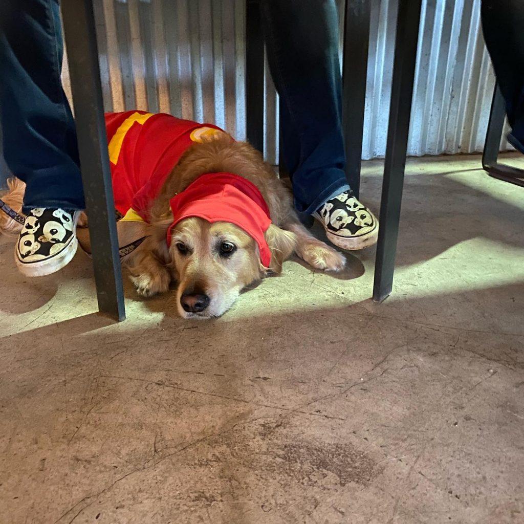 Dog Friendly Bars Maui