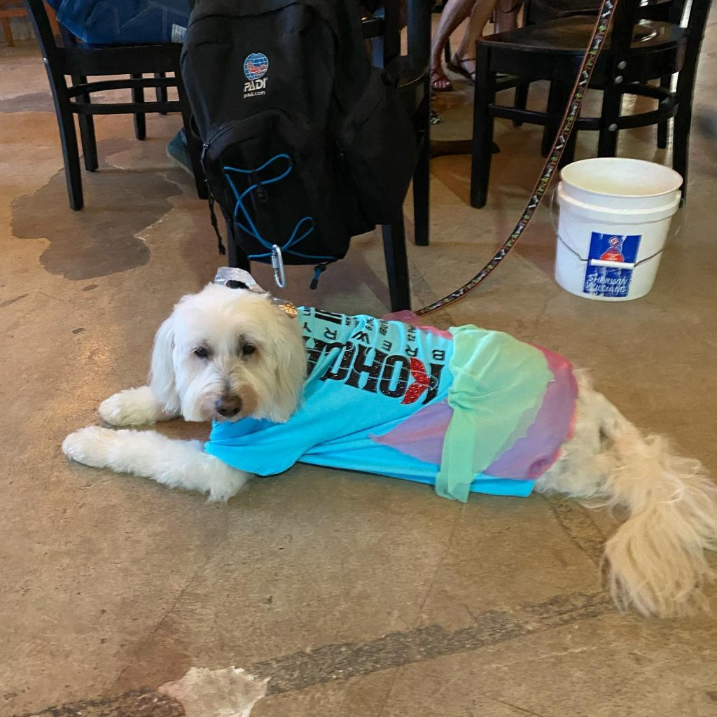 happy hour dog wearing clothes